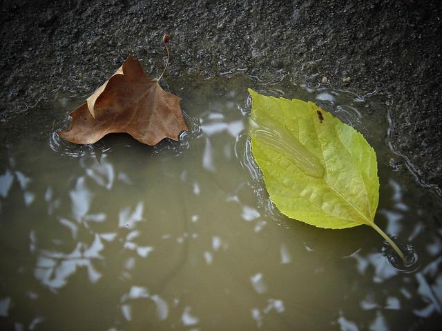 Csapadékvíz